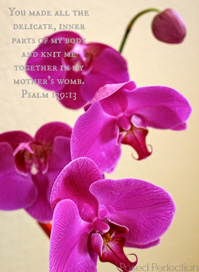 Pink Orchid with Psalm 139:13