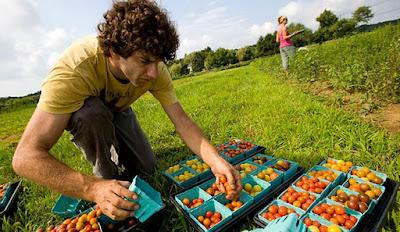 Ide usaha sampingan bidang pertanian menguntungkan image