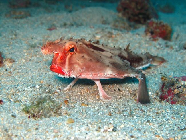 imagenes de criaturas marinas