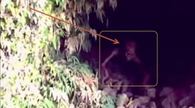 Alien di Colombia