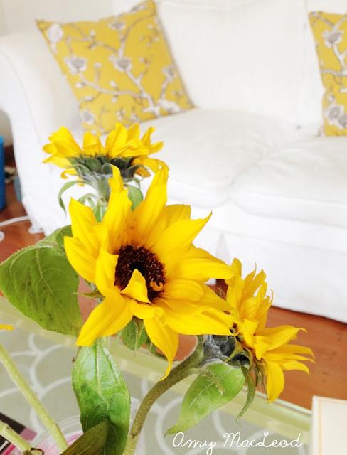 Sunflowers || Positive Friday || Amy MacLeod