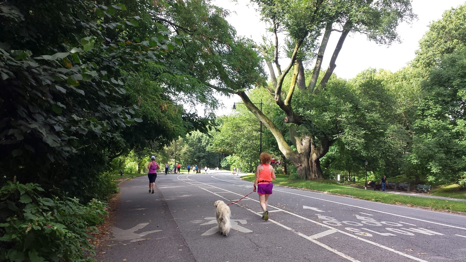 Running Path in Prospect Park
