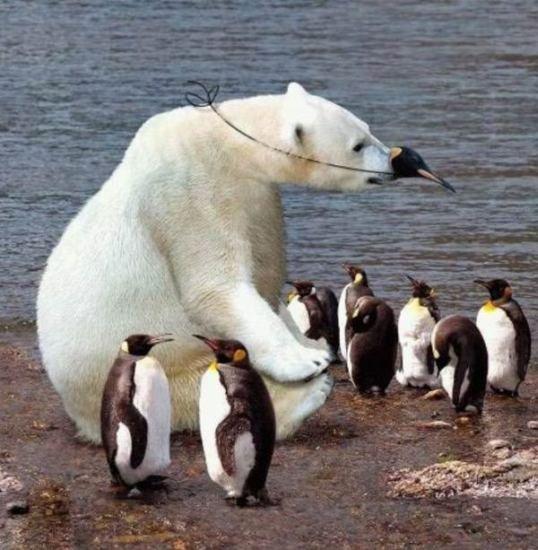 imagenes graciosas de pinguinos