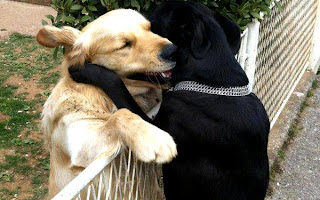 Funny Animals Hug