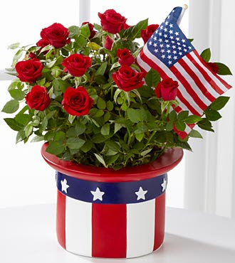American Pride Mini Rose