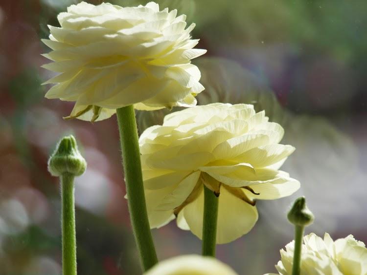 En særlig farve blomster