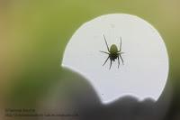 macro araignée