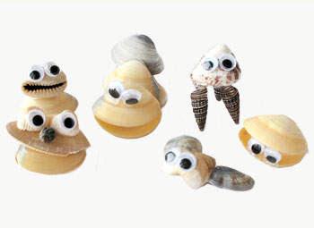 seashell activities