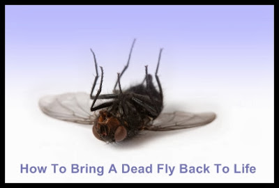 How to bring a dead fly back to life
