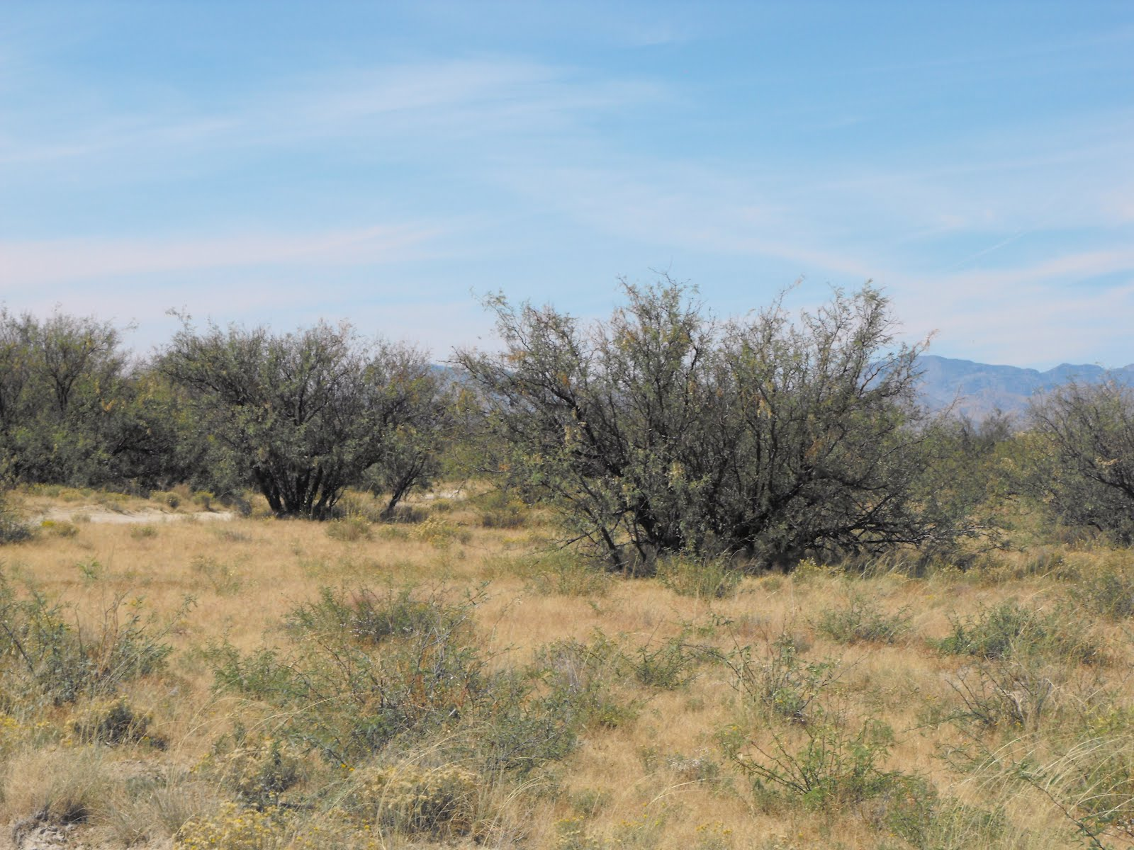 Cochise County Property Tax Lookup