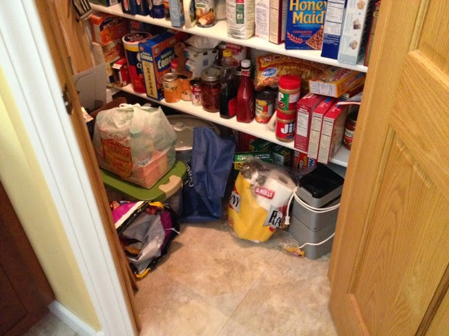 cats who mastered the art of hid and seek-4