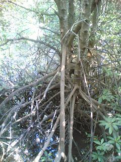 fungsi hutan paya bakau