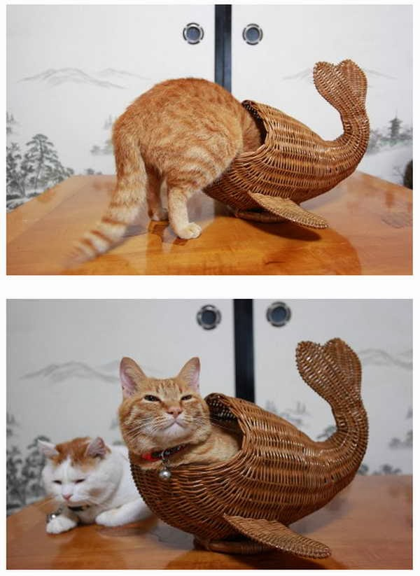 Funny cats - part 81 (40 pics + 10 gifs), cat pics, cat sits in fish shaped basket