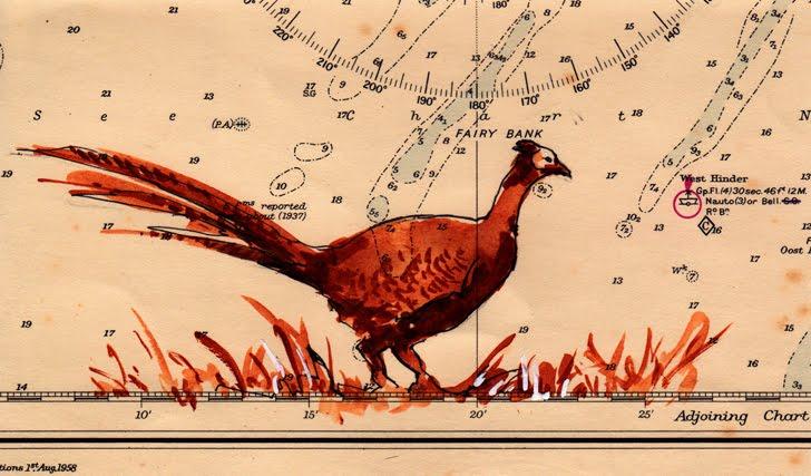 Pheasant (Faisan)