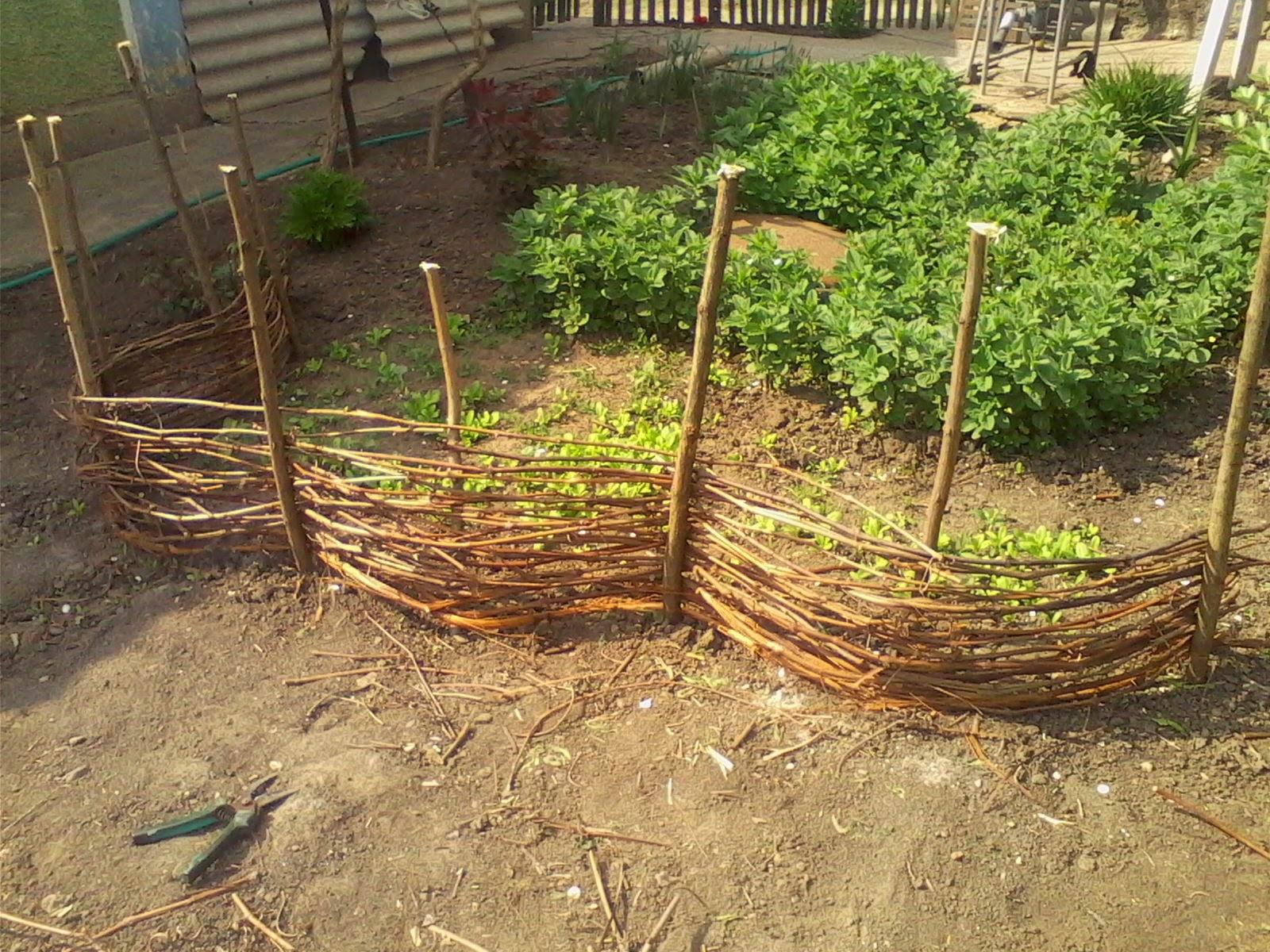 Посадка томатов семенами в открытый грунт Фермовед - животноводство и сад 69