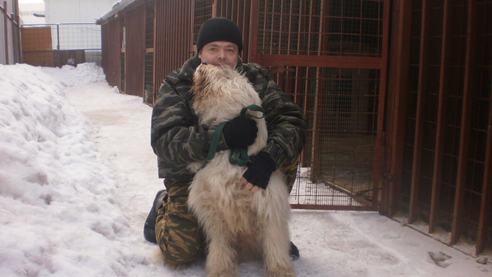 Живой мир сибири - показать сообщение отдельно - южнорусская овчарка
