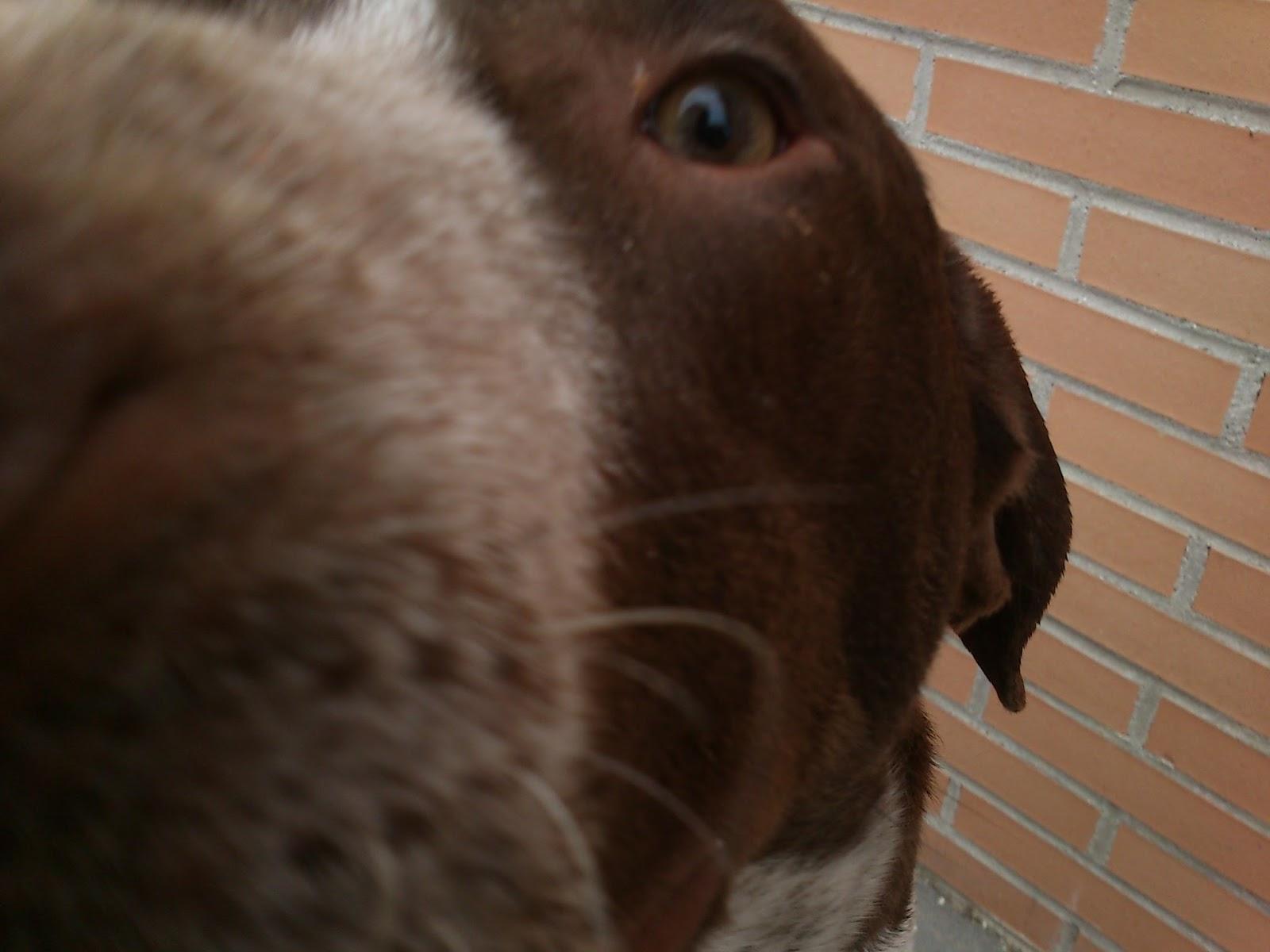 Centro de protecci n animal arroyomolinos perros - Chino arroyomolinos ...