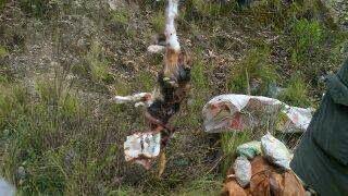 Perros sacrificados a satanas en El Alto