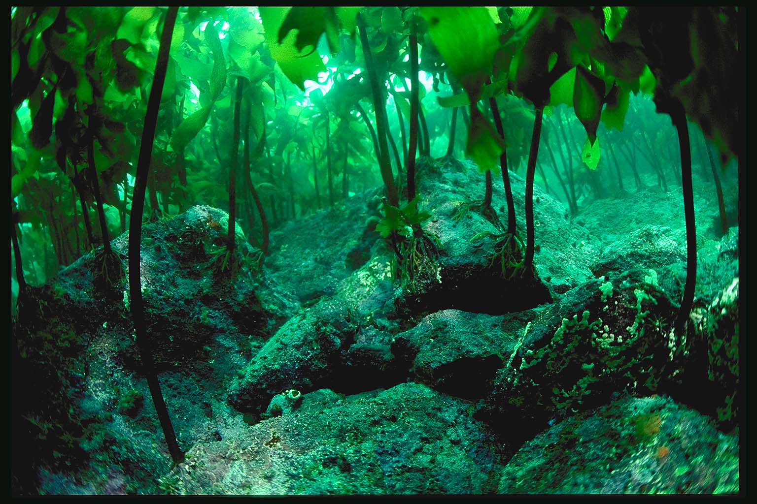 Kelp forest the minute after for Ocean floor description