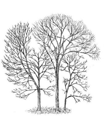 form trees