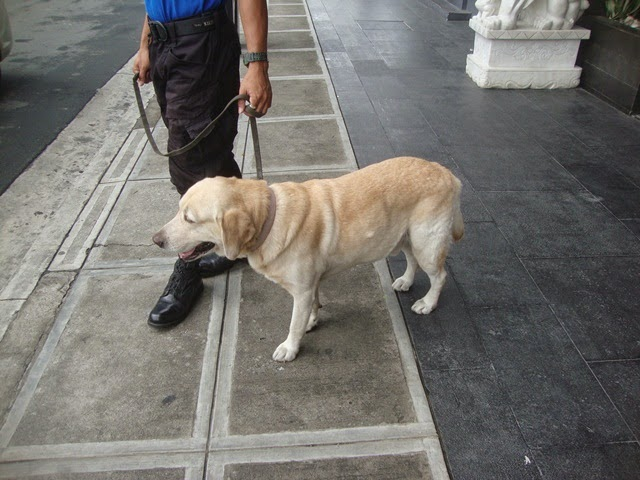 F1 HOTEL MANILA, HOTEL GUARD DOG, WORKING ANIMALS