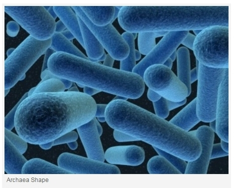 bacteria and archaea What is the difference between archaea and eubacteria (or bacteria) • archaea is a separate kingdom from the eubacteria, although both of them are prokaryotes.