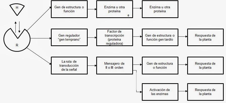 Apuntes de Fisiología Vegetal: octubre 2012