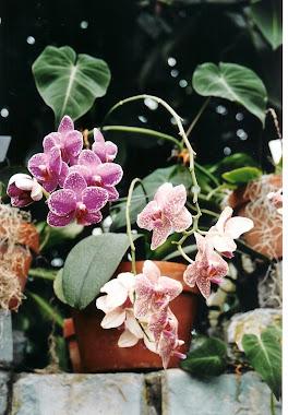 De la Adina-Mihaela Mariasiu, Gradina Botanica din Montreal, Canada