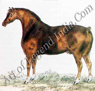 The Suffolk Punch One of England's finest draught breeds the Suffolk Punch was used for towing barges. These deep-chested horses also worked on farms they could pull huge loads, dropping forward on to their knees when necessary to get better leverage.