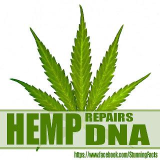 HEMP REPAIRS DNA