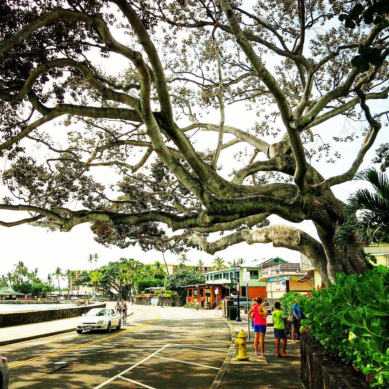 Hawaii 2013.
