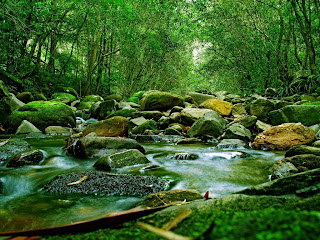 River Deep Forest 3D HD Wallpaper at freewallpaper01