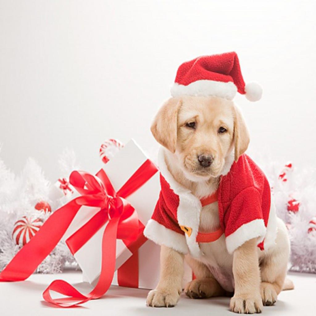 Christmas Dogs IPad Wallpapers
