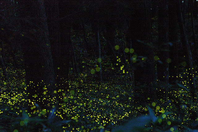 The Fictitious Life Of Elizabeth Black Fireflies In The