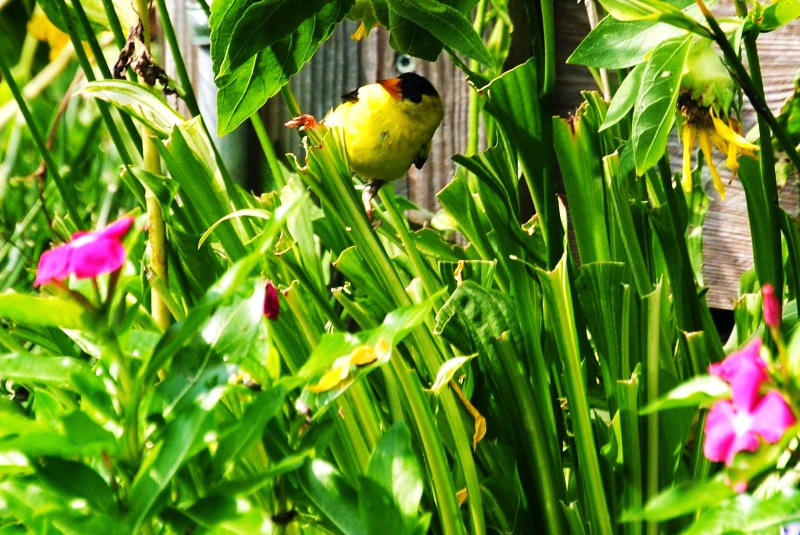 bird in bed of vinca garden