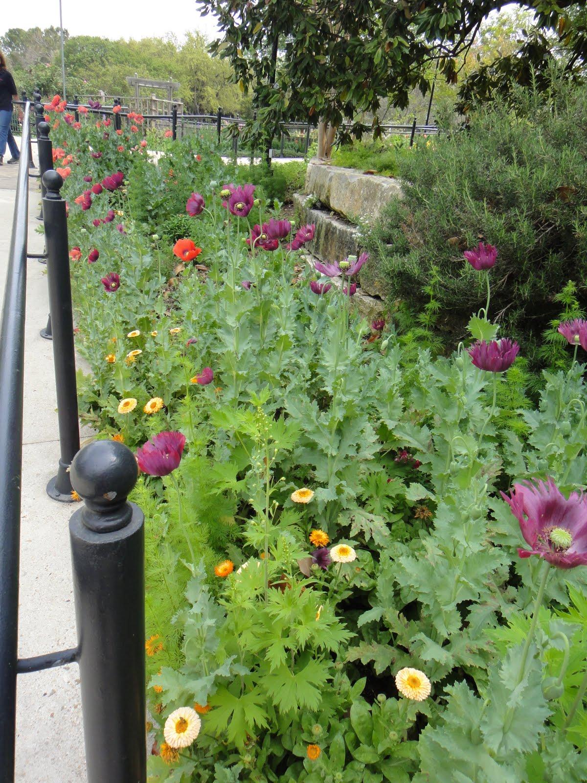 Gardenkim San Antonio Botanic Garden