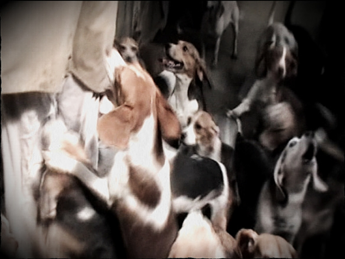 Pack of beagles. From Full Cry Hound Blog. Notes from the Pack.
