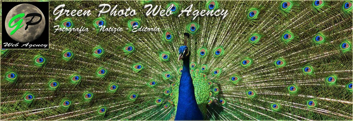 Green Photo Web Agency