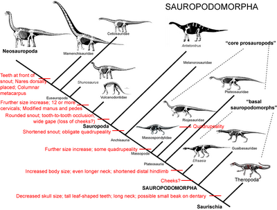 High Quality Images For Triceratops Diagram Www Designhd0hd Gq