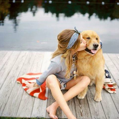 Cute Golden Retriever Beautiful
