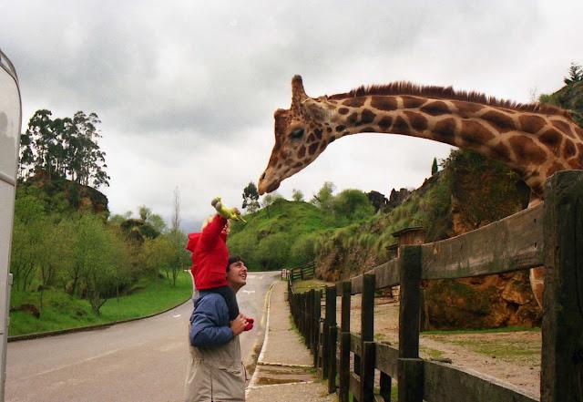 parque de Cabarceno, alimentando animales, zoos