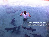 kumpulan ikan hiu di kolam penangkaran