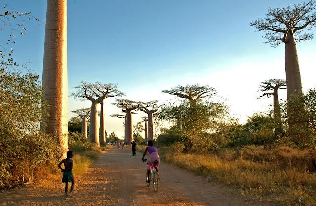 http://1.bp.blogspot.com/-Z_2-uMVfoTo/T4NdPlgV_2I/AAAAAAAAFko/M_0BMC1Wb3M/s320/Madagascar+37.jpg
