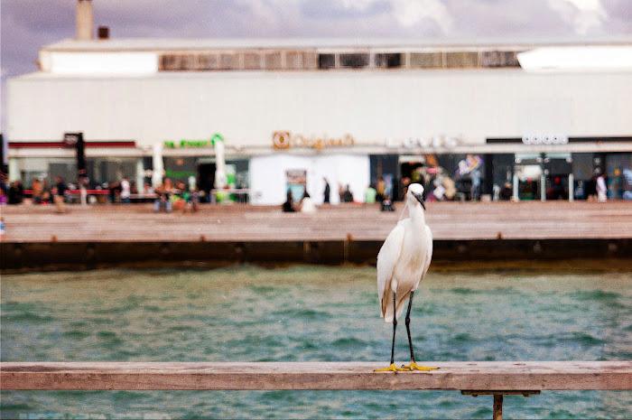 DSC 0207 Tel Aviv Port (Namal): Last Day of Spring Tel Aviv Photos Art Images Pictures TLVSpot.com