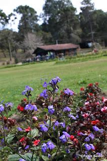 Lanchonete (Horto Florestal, Campos do Jordão)
