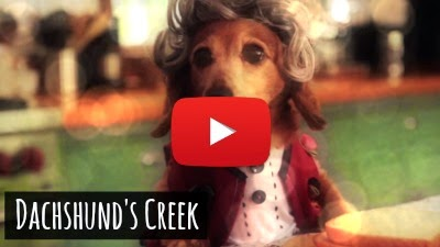 Watch how these bunch of tiny dogs from the Dachshund's breed recreate the magic of 90's Dawson's Creek TV show remake via geniushowto.blogspot.com cute dog spoof videos
