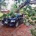 Las consecuencias de la fuerte tormenta que azotó a Rincón
