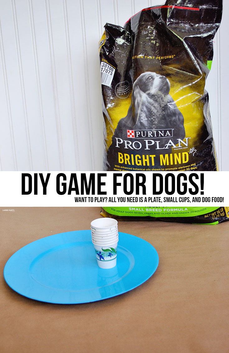 Is your dog over the age of 7? These two spoiled pups are but you'd never guess it, check out their new routine that keeps them young including a brain game just for dogs...