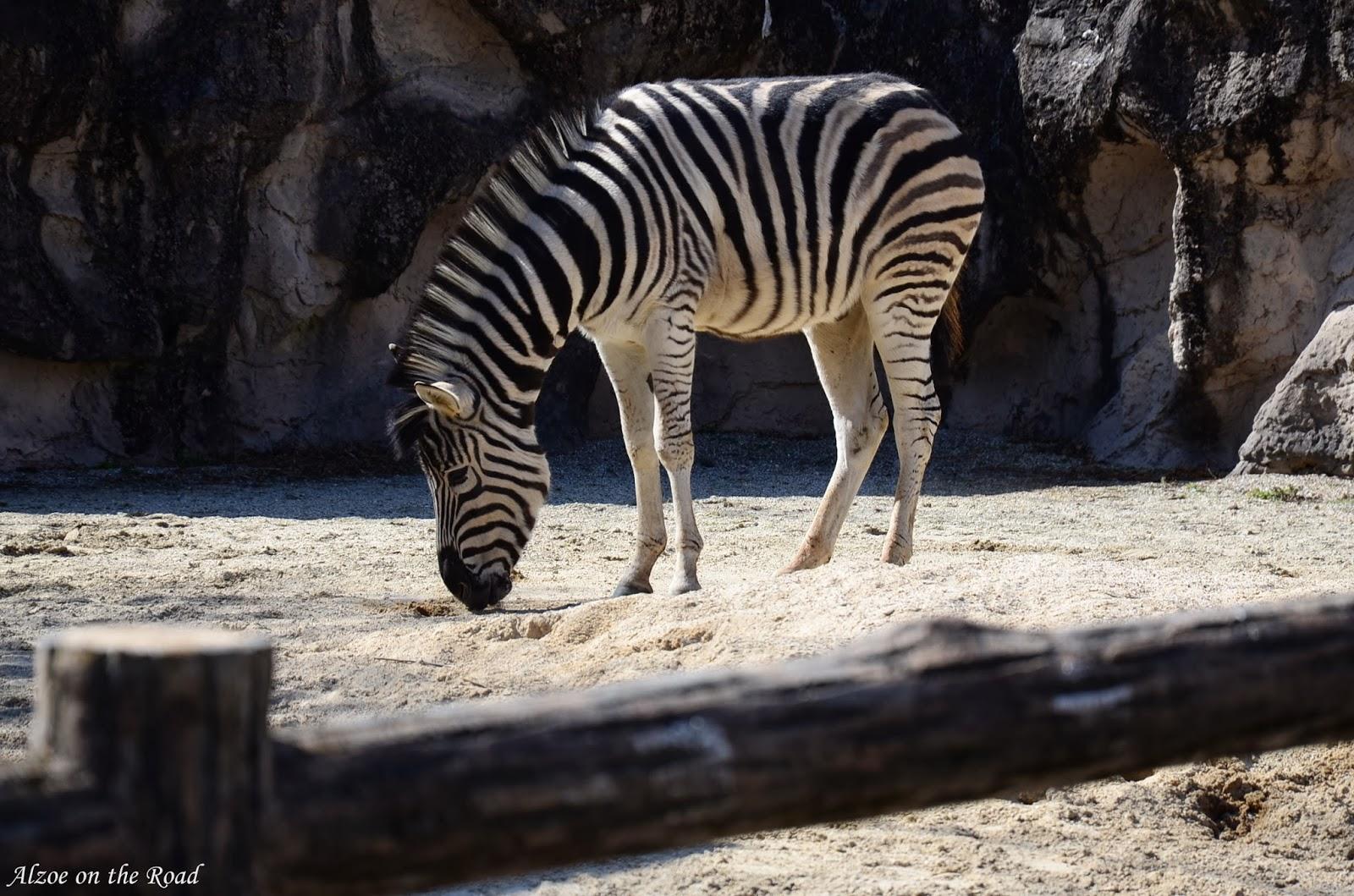 動物園 東山