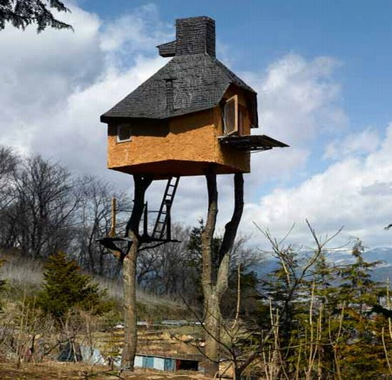 Top: A Miniature Tree House